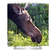 Moose Profile Shower Curtain