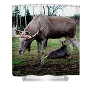Moose Rest Shower Curtain