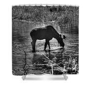 Moose Silhouette Shower Curtain