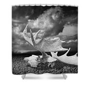 Moose Skull On Parched Earth Shower Curtain