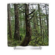 More Island Tree Art Shower Curtain