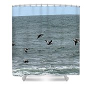 More Pelicans Shower Curtain