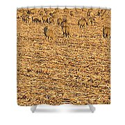 More Sheep To Count To Go To Sleep Shower Curtain