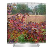 More Sweet Gum  Shower Curtain