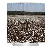 Morgan County Cotton Crop Shower Curtain