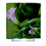 Morning Awakening Shower Curtain