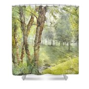 Morning Birches Shower Curtain