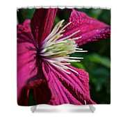 Morning Clematis Shower Curtain