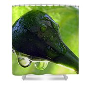 Morning Dew Figs Shower Curtain