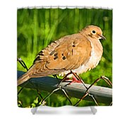 Morning Dove II Photoart Shower Curtain
