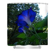 Morning Glory 01 Shower Curtain