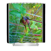Morning Glory Beginning Shower Curtain