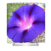 Morning Glory Fire Shower Curtain