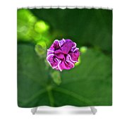 Morning Glory Puckered Up Shower Curtain