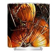 Morning Pumpkins Shower Curtain