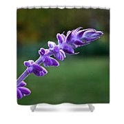 Morning Sage Shower Curtain
