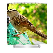 Morning Sparrow II Shower Curtain