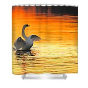 Morning Stretch Shower Curtain