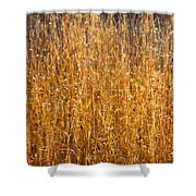 Morning Sunshine On The Marsh Shower Curtain