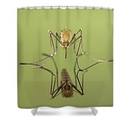 Mosquito Culicidae Freshly Hatched Shower Curtain