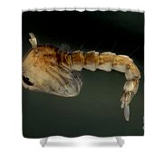 Mosquito Pupa Shower Curtain