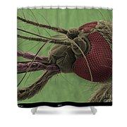 Mosquitos Head, Sem Shower Curtain