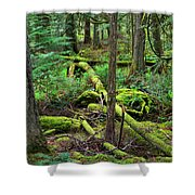 Moss And Fallen Trees In The Rainforest Of The Pacific Northwest Shower Curtain