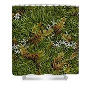 Moss And Lichen Shower Curtain