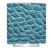 Moss Cells Shower Curtain