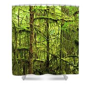 Moss-covered Trees Shower Curtain