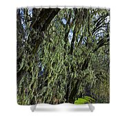 Moss Covered Trees Shower Curtain