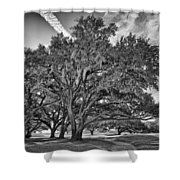 Moss-draped Live Oaks Shower Curtain