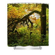 Moss In The Forest Shower Curtain