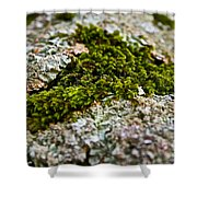 Moss In The Middle Shower Curtain