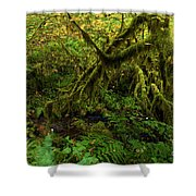 Moss In The Rainforest Shower Curtain