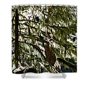 Moss On Trees Shower Curtain
