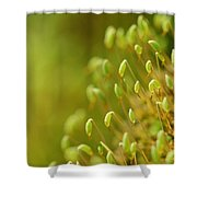 Moss With Capsules Shower Curtain