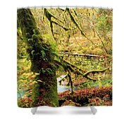 Mossy Bend Shower Curtain