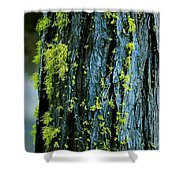 Mossy Compass Shower Curtain