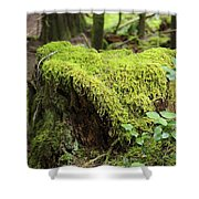 Mossy Old Stump Shower Curtain