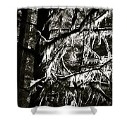 Mossy Trees In Black And White 2 Shower Curtain