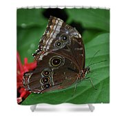 Moth I 2403 Shower Curtain