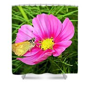 Moth On A Cosmos Shower Curtain