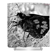 Moth One Shower Curtain