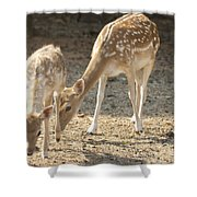 Mother And Child V2 Shower Curtain