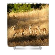 Mother And Twins Shower Curtain