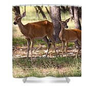 Mother And Yearling Deer Shower Curtain
