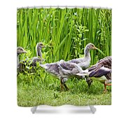 Mother Goose Leading Goslings Shower Curtain by Simon Bratt Photography LRPS