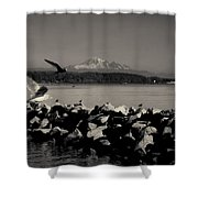Mount Washington View From White Rock Bc Shower Curtain