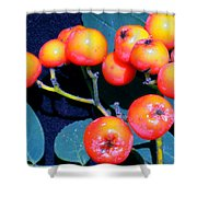 Mountain Ash Seeds Shower Curtain